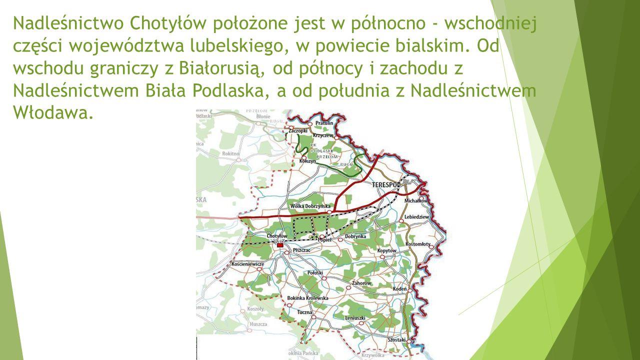 Nadleśnictwo Chotyłów położone jest w północno - wschodniej części województwa lubelskiego, w powiecie bialskim.