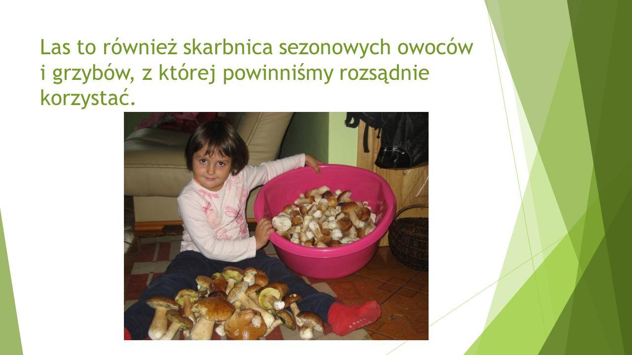 Las to również skarbnica sezonowych owoców i grzybów, z której powinniśmy rozsądnie korzystać.