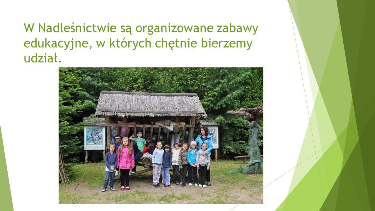 W Nadleśnictwie są organizowane zabawy edukacyjne, w których chętnie bierzemy udział.