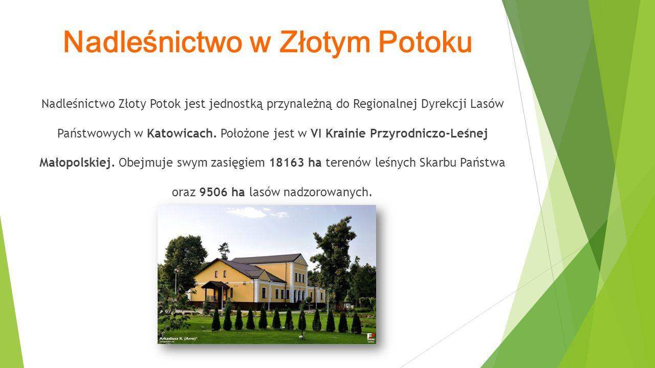 Nadleśnictwo w Złotym Potoku Nadleśnictwo Złoty Potok jest jednostką przynależną do Regionalnej Dyrekcji Lasów Państwowych w Katowicach.