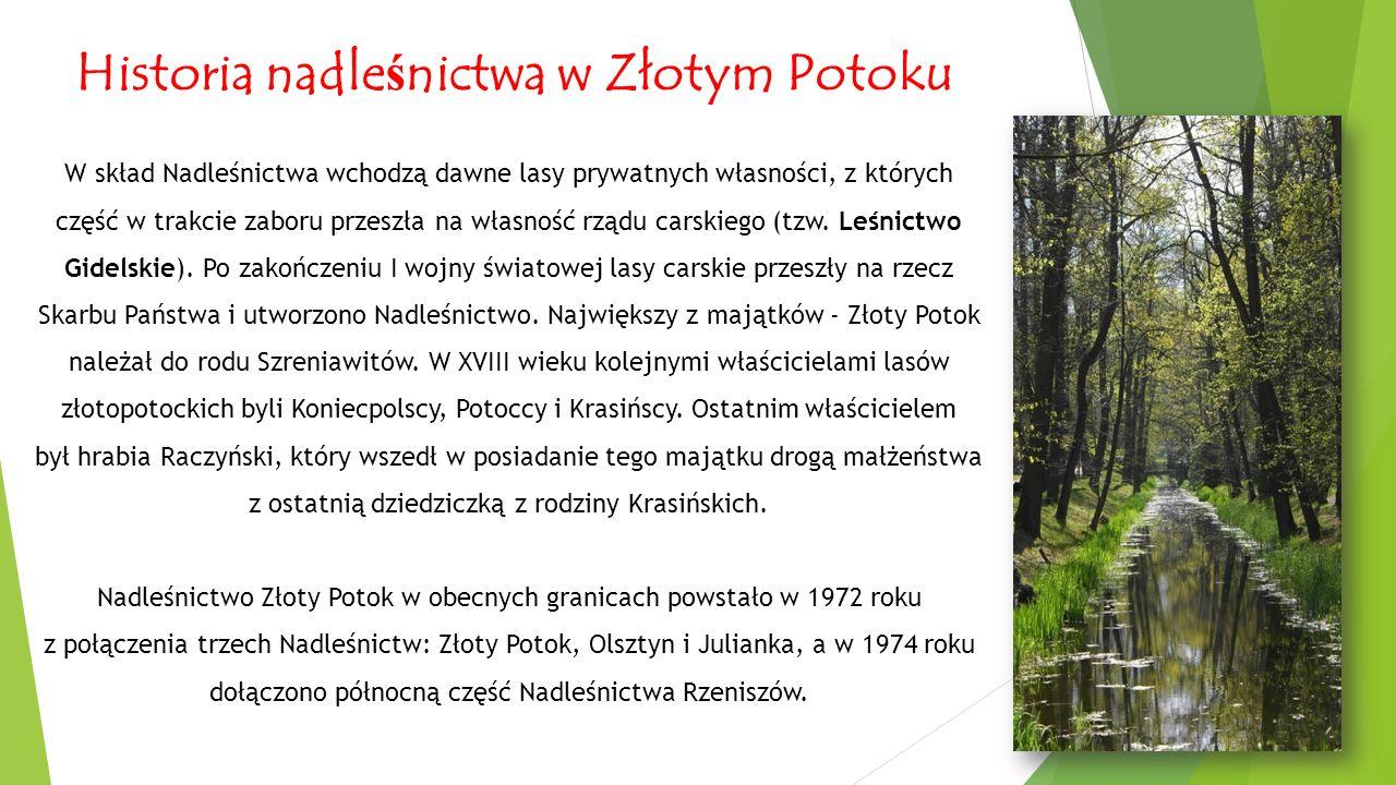 Historia nadle ś nictwa w Złotym Potoku W skład Nadleśnictwa wchodzą dawne lasy prywatnych własności, z których część w trakcie zaboru przeszła na własność rządu carskiego (tzw.