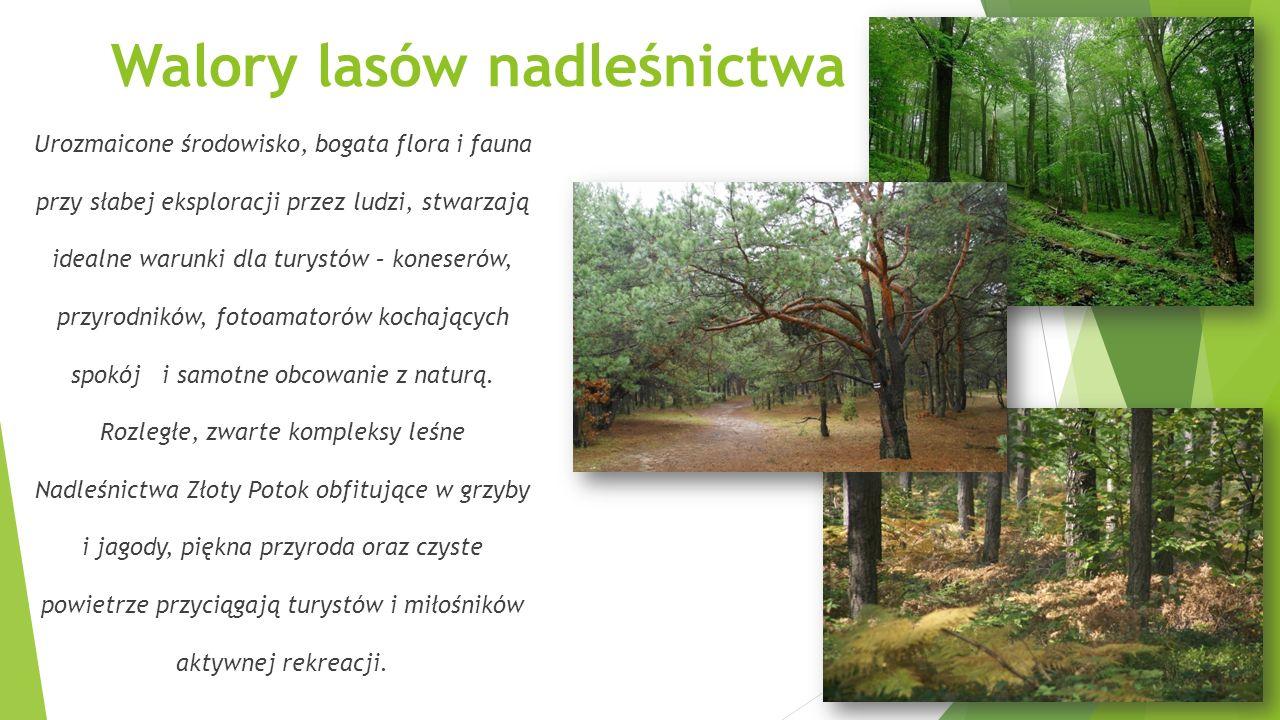 Walory lasów nadleśnictwa Urozmaicone środowisko, bogata flora i fauna przy słabej eksploracji przez ludzi, stwarzają idealne warunki dla turystów – k