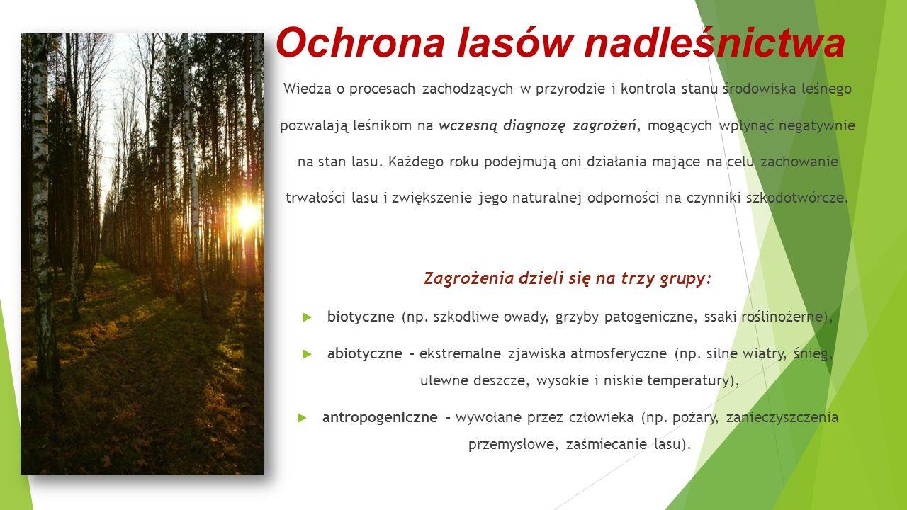 Ochrona lasów nadleśnictwa Wiedza o procesach zachodzących w przyrodzie i kontrola stanu środowiska leśnego pozwalają leśnikom na wczesną diagnozę zag