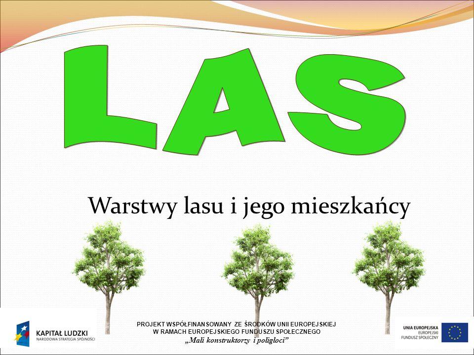 """Warstwy lasu i jego mieszkańcy PROJEKT WSP Ó ŁFINANSOWANY ZE ŚRODK Ó W UNII EUROPEJSKIEJ W RAMACH EUROPEJSKIEGO FUNDUSZU SPOŁECZNEGO """"Mali konstruktorzy i poligloci"""