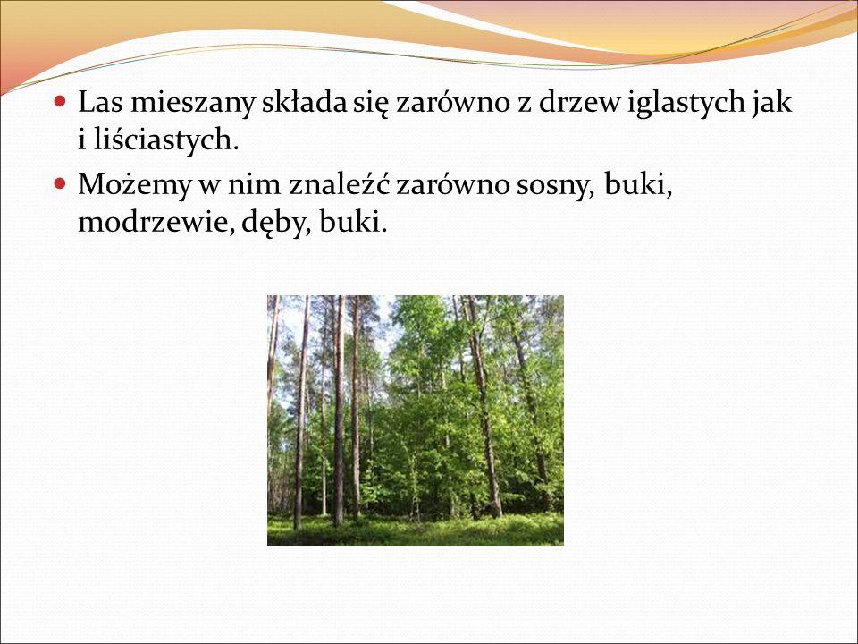 Las mieszany składa się zarówno z drzew iglastych jak i liściastych. Możemy w nim znaleźć zarówno sosny, buki, modrzewie, dęby, buki.