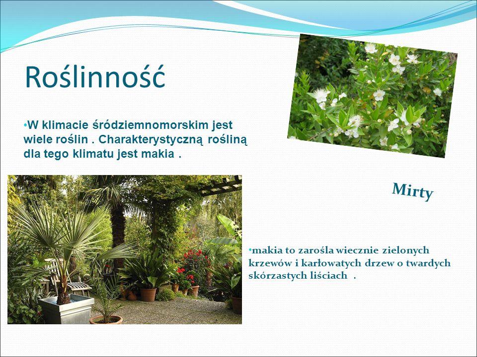 Roślinność Mirty W klimacie śródziemnomorskim jest wiele roślin. Charakterystyczną rośliną dla tego klimatu jest makia. makia to zarośla wiecznie ziel