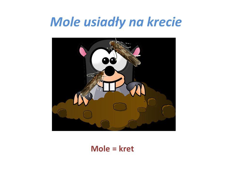Mole usiadły na krecie Mole = kret