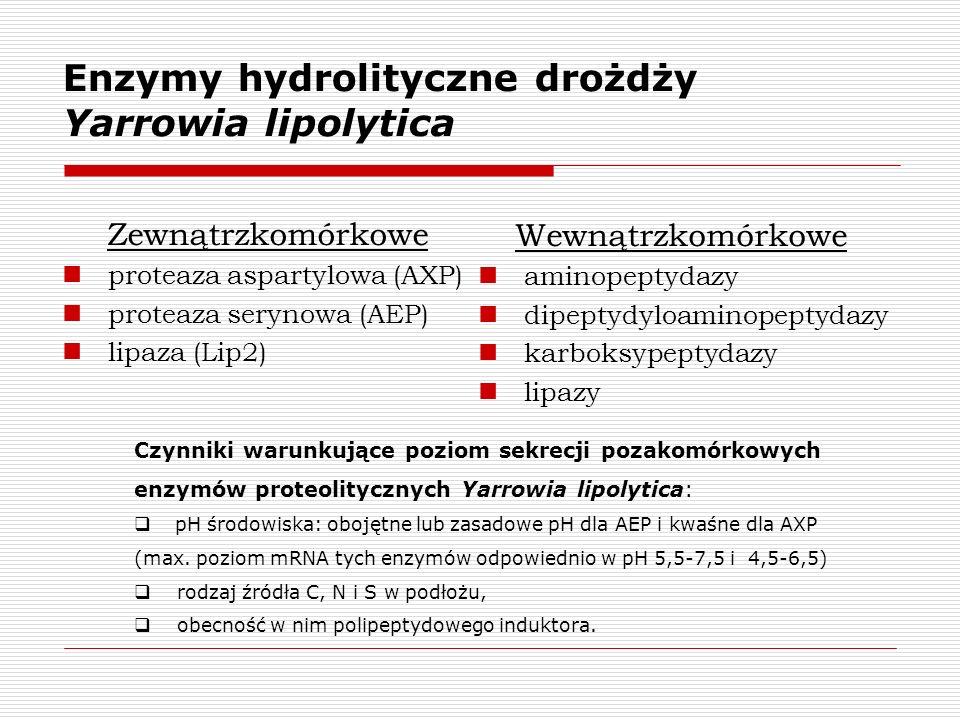 Enzymy hydrolityczne drożdży Yarrowia lipolytica Zewnątrzkomórkowe proteaza aspartylowa (AXP) proteaza serynowa (AEP) lipaza (Lip2) Wewnątrzkomórkowe