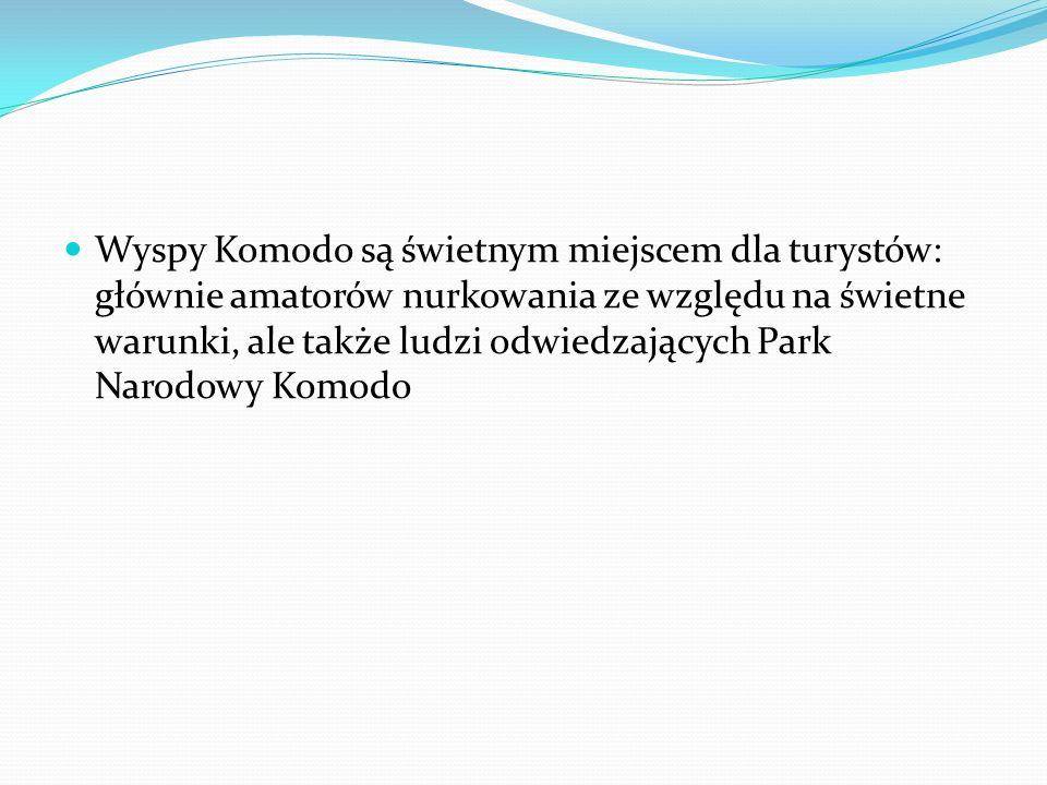 Wyspy Komodo są świetnym miejscem dla turystów: głównie amatorów nurkowania ze względu na świetne warunki, ale także ludzi odwiedzających Park Narodowy Komodo