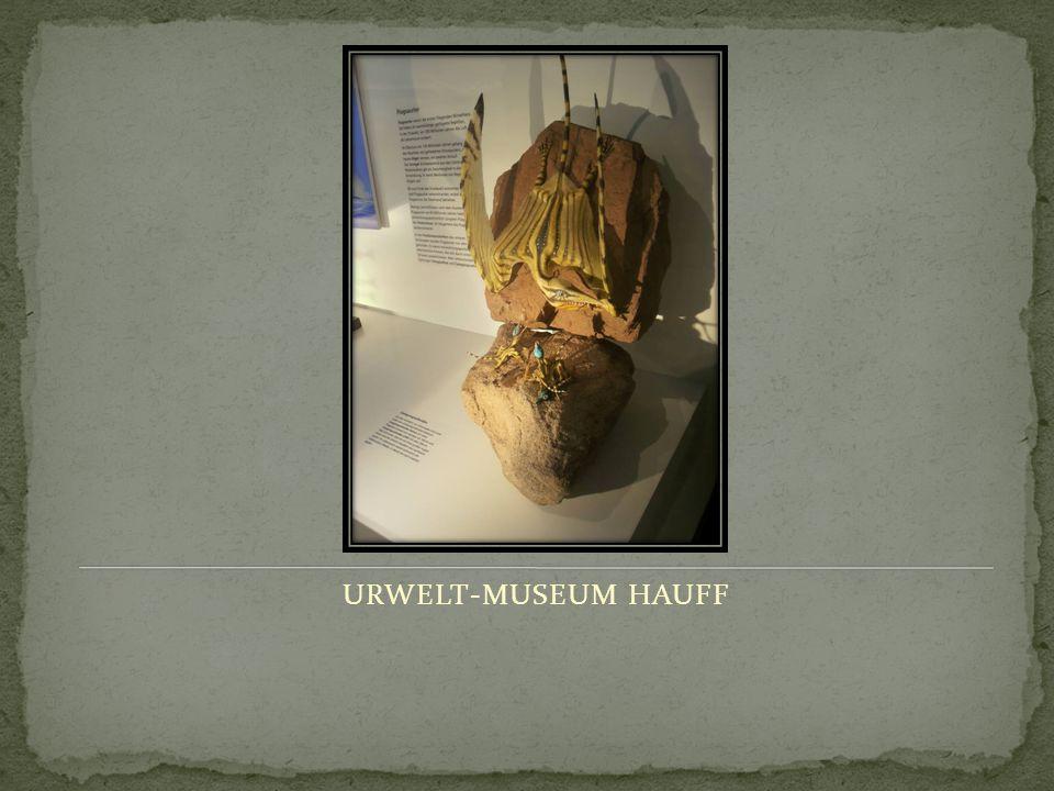 URWELT-MUSEUM HAUFF