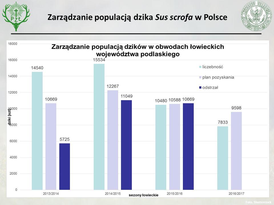 Foto. Shutterstock Zarządzanie populacją dzika Sus scrofa w Polsce
