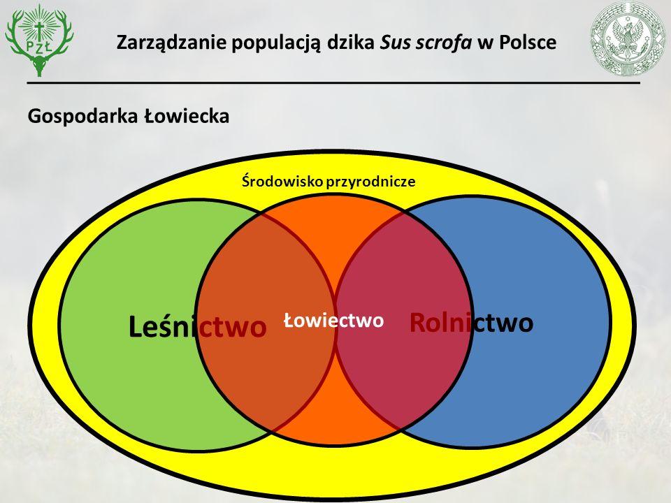 Zarządzanie populacją dzika Sus scrofa w Polsce Rolnictwo Leśnictwo Łowiectwo Środowisko przyrodnicze Gospodarka Łowiecka
