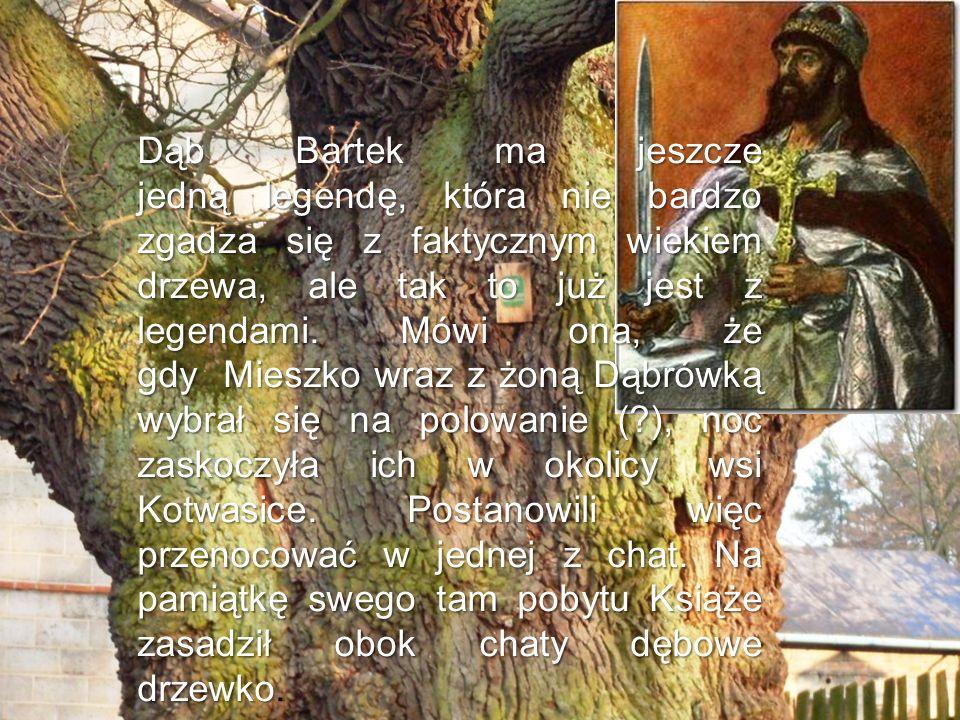Dąb Bartek ma jeszcze jedną legendę, która nie bardzo zgadza się z faktycznym wiekiem drzewa, ale tak to już jest z legendami. Mówi ona, że gdy Mieszk