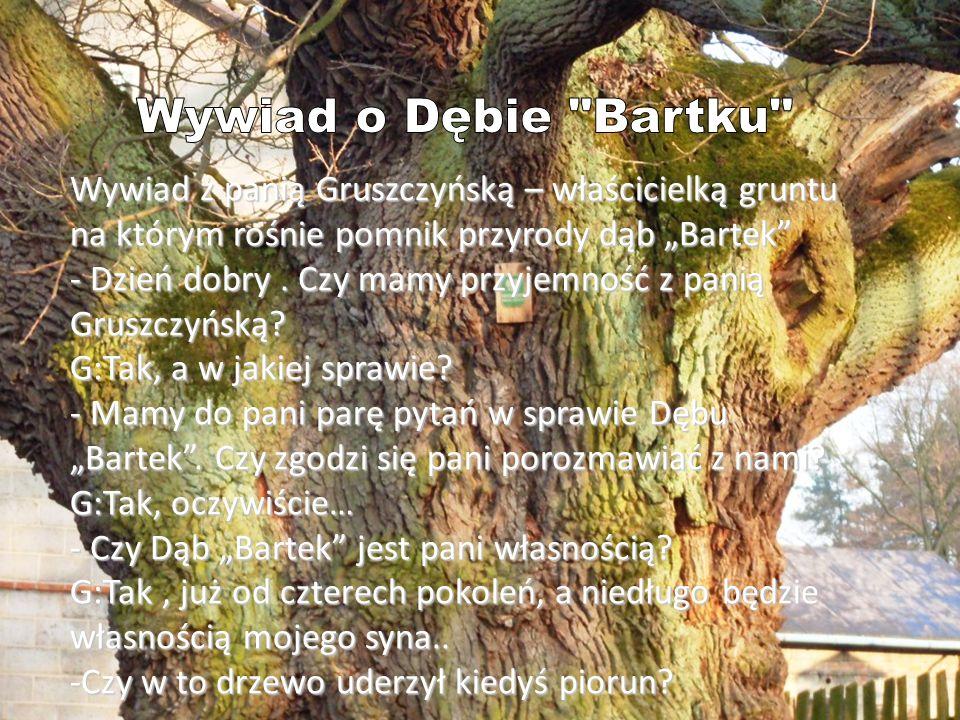 """Wywiad z panią Gruszczyńską – właścicielką gruntu na którym rośnie pomnik przyrody dąb """"Bartek"""" - Dzień dobry. Czy mamy przyjemność z panią Gruszczyńs"""