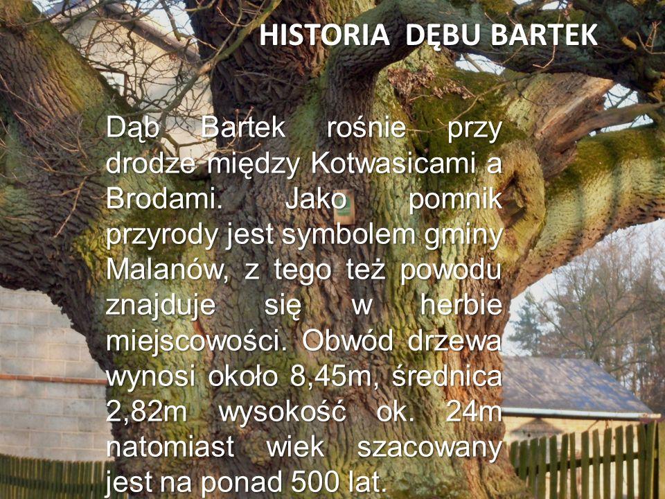 HISTORIA DĘBU BARTEK Dąb Bartek rośnie przy drodze między Kotwasicami a Brodami. Jako pomnik przyrody jest symbolem gminy Malanów, z tego też powodu z
