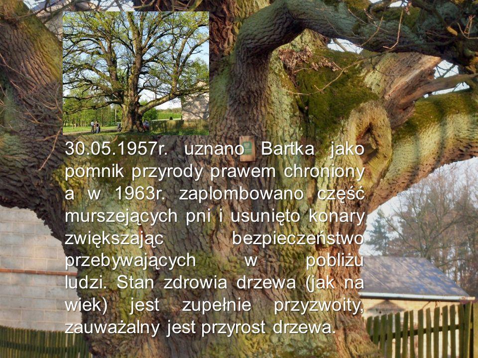 30.05.1957r. uznano Bartka jako pomnik przyrody prawem chroniony a w 1963r. zaplombowano część murszejących pni i usunięto konary zwiększając bezpiecz