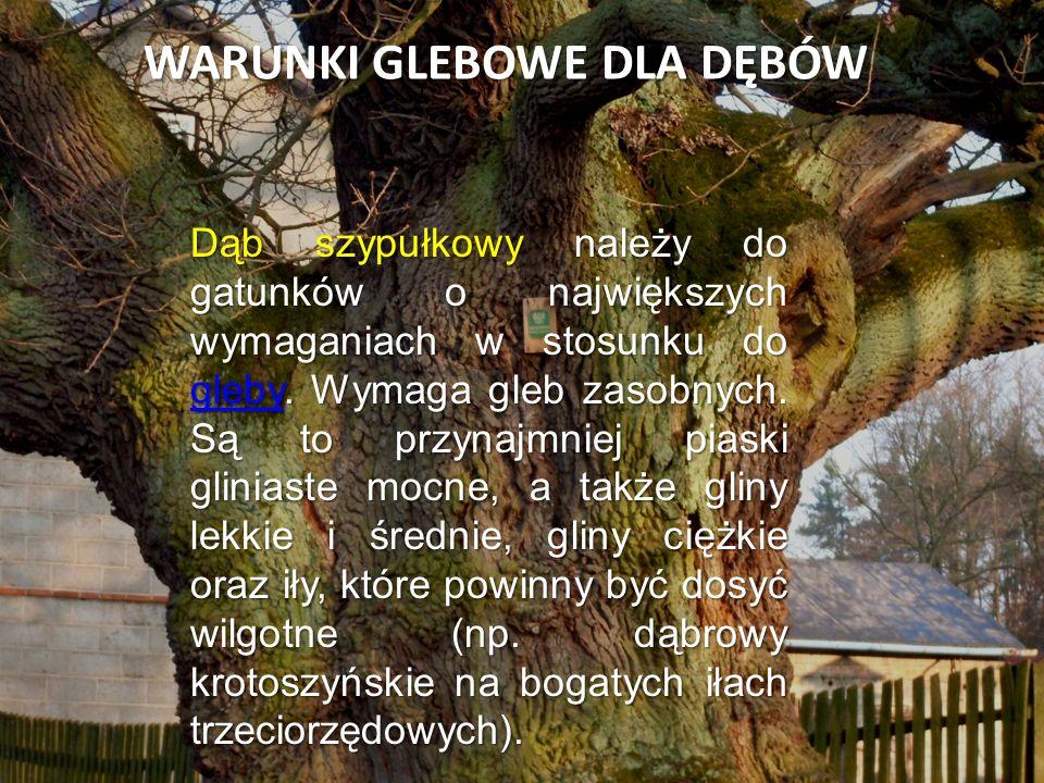 WARUNKI GLEBOWE DLA DĘBÓW Dąb szypułkowy należy do gatunków o największych wymaganiach w stosunku do gleby. Wymaga gleb zasobnych. Są to przynajmniej