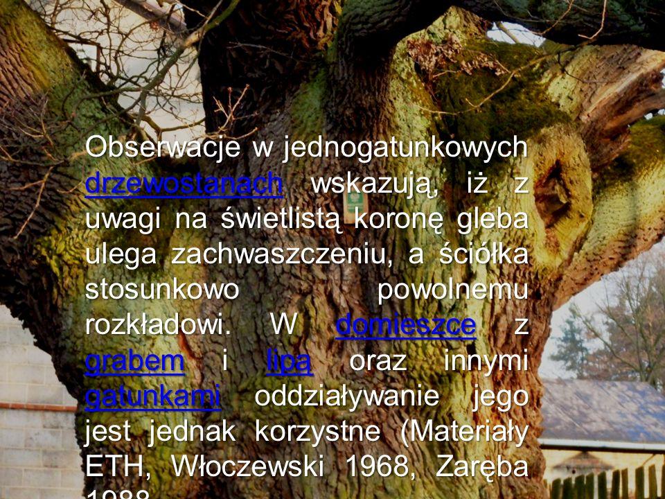 Obserwacje w jednogatunkowych drzewostanach wskazują, iż z uwagi na świetlistą koronę gleba ulega zachwaszczeniu, a ściółka stosunkowo powolnemu rozkł