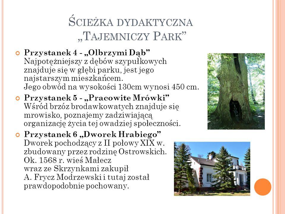 """Ś CIEŻKA DYDAKTYCZNA """"T AJEMNICZY P ARK Przystanek 4 - """"Olbrzymi Dąb Najpotężniejszy z dębów szypułkowych znajduje się w głębi parku, jest jego najstarszym mieszkańcem."""