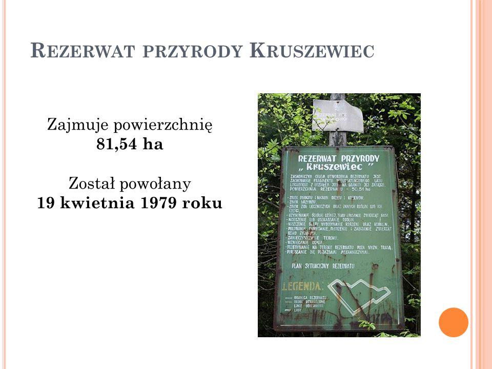 R EZERWAT PRZYRODY K RUSZEWIEC Zajmuje powierzchnię 81,54 ha Został powołany 19 kwietnia 1979 roku