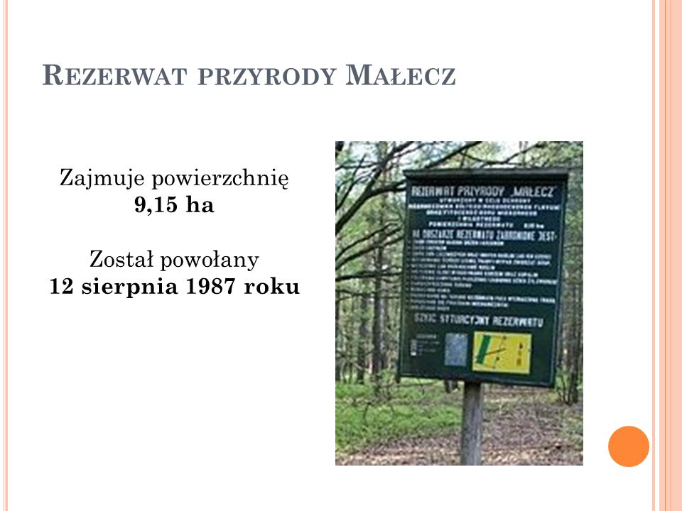R EZERWAT PRZYRODY M AŁECZ Zajmuje powierzchnię 9,15 ha Został powołany 12 sierpnia 1987 roku