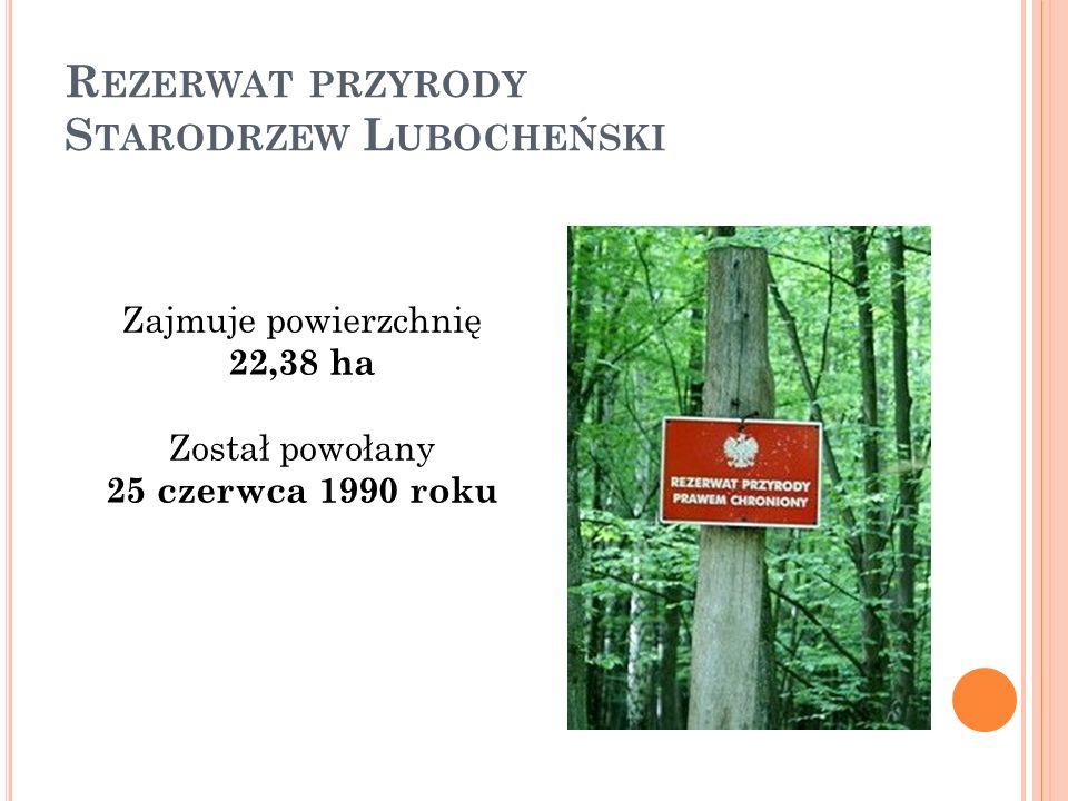 R EZERWAT PRZYRODY S TARODRZEW L UBOCHEŃSKI Zajmuje powierzchnię 22,38 ha Został powołany 25 czerwca 1990 roku