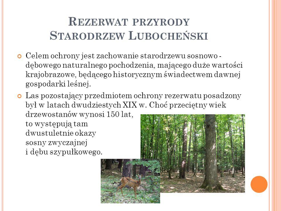 R EZERWAT PRZYRODY S TARODRZEW L UBOCHEŃSKI Celem ochrony jest zachowanie starodrzewu sosnowo - dębowego naturalnego pochodzenia, mającego duże wartości krajobrazowe, będącego historycznym świadectwem dawnej gospodarki leśnej.