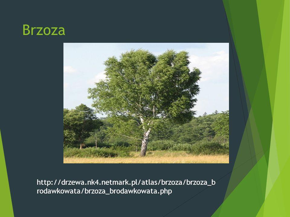 Brzoza http://drzewa.nk4.netmark.pl/atlas/brzoza/brzoza_b rodawkowata/brzoza_brodawkowata.php