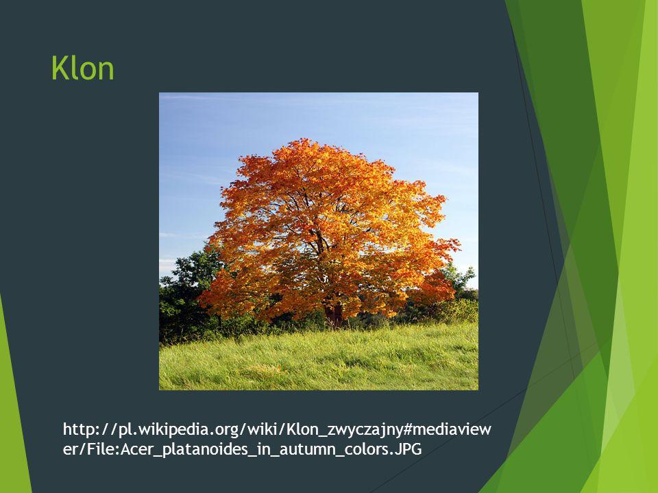 Klon http://pl.wikipedia.org/wiki/Klon_zwyczajny#mediaview er/File:Acer_platanoides_in_autumn_colors.JPG