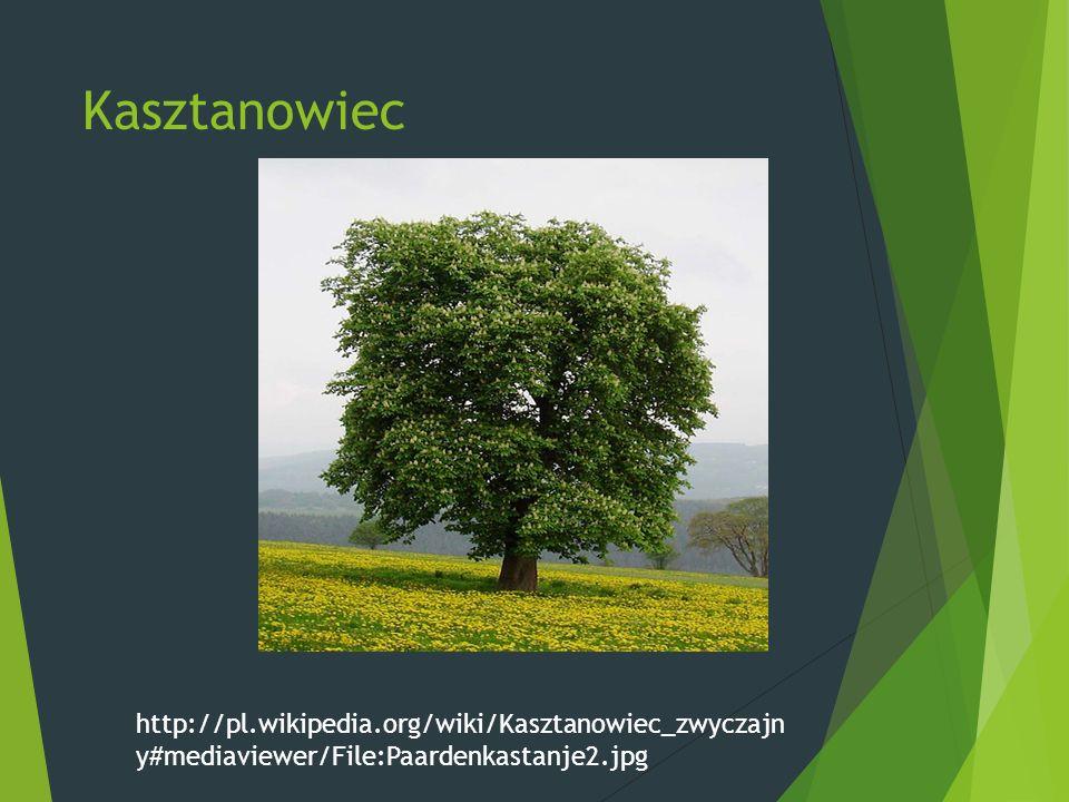 Kasztanowiec http://pl.wikipedia.org/wiki/Kasztanowiec_zwyczajn y#mediaviewer/File:Paardenkastanje2.jpg