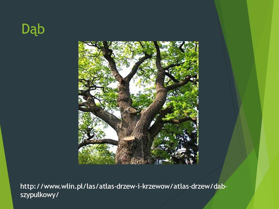 Dąb http://www.wlin.pl/las/atlas-drzew-i-krzewow/atlas-drzew/dab- szypulkowy/