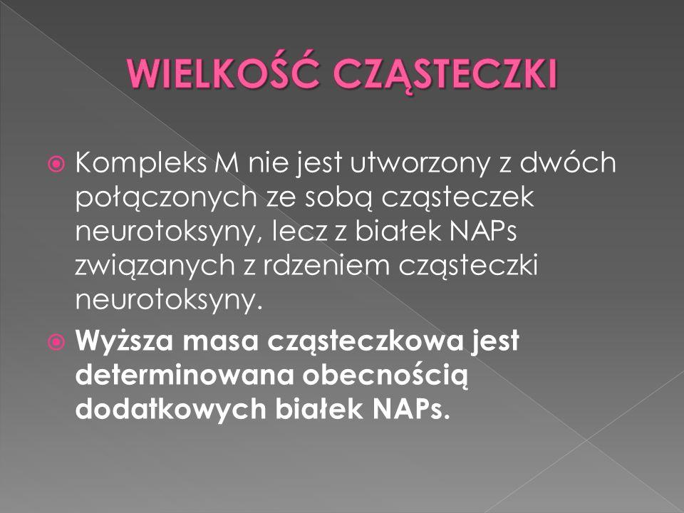  Kompleks M nie jest utworzony z dwóch połączonych ze sobą cząsteczek neurotoksyny, lecz z białek NAPs związanych z rdzeniem cząsteczki neurotoksyny.