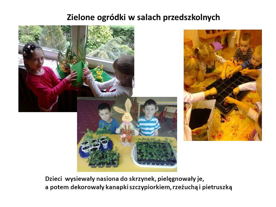 Zielone ogródki w salach przedszkolnych Dzieci wysiewały nasiona do skrzynek, pielęgnowały je, a potem dekorowały kanapki szczypiorkiem, rzeżuchą i pi