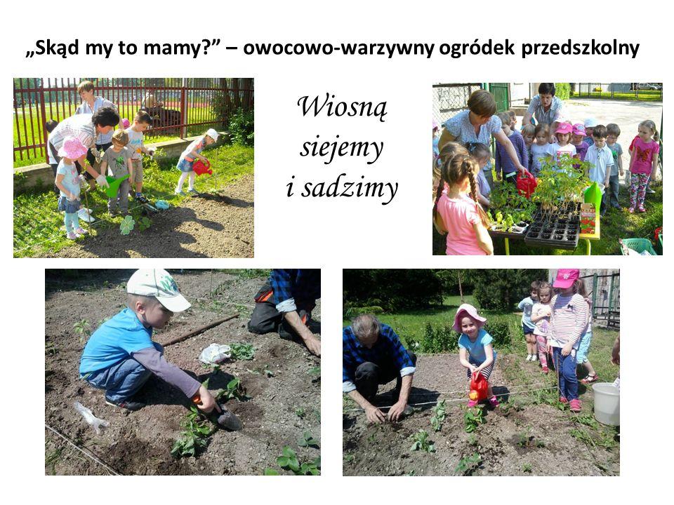 """""""Skąd my to mamy?"""" – owocowo-warzywny ogródek przedszkolny Wiosną siejemy i sadzimy"""