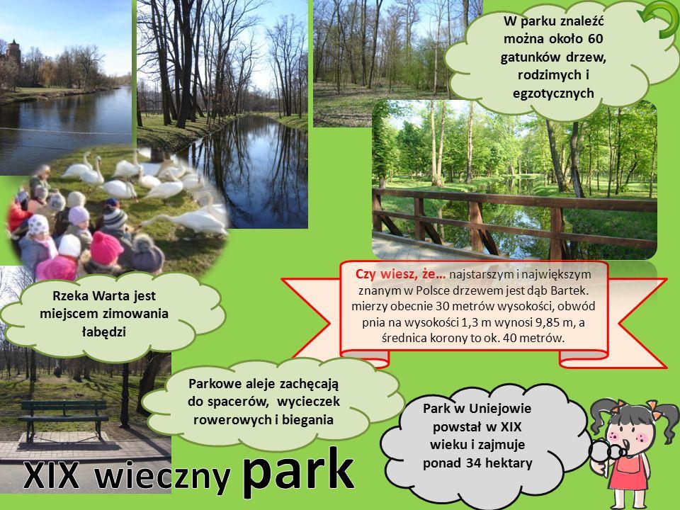 Czy wiesz, że… najstarszym i największym znanym w Polsce drzewem jest dąb Bartek. mierzy obecnie 30 metrów wysokości, obwód pnia na wysokości 1,3 m wy