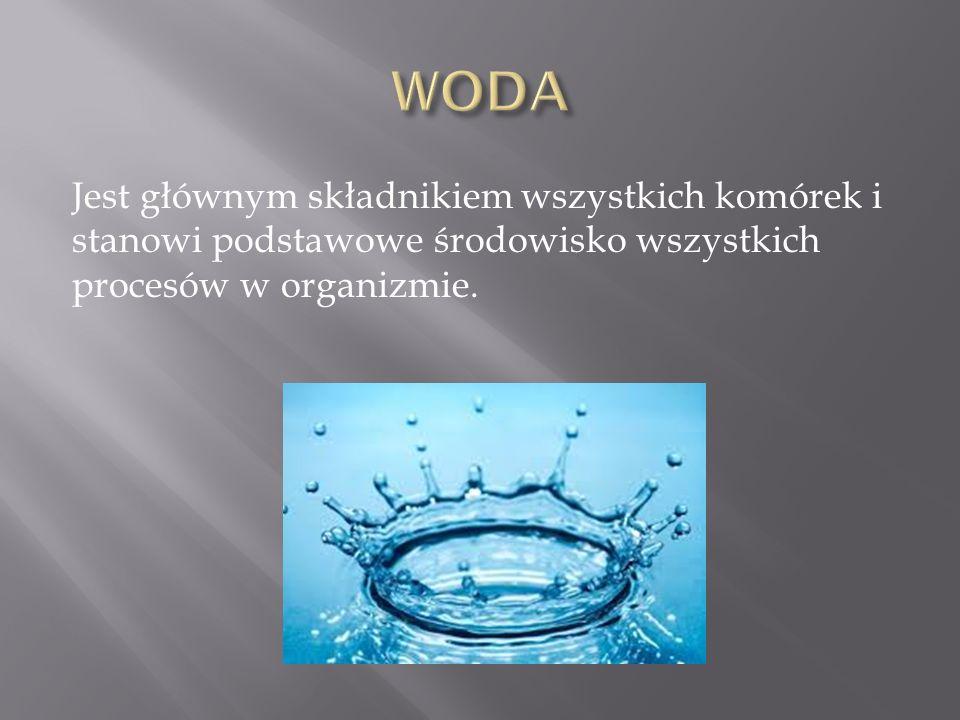 Jest głównym składnikiem wszystkich komórek i stanowi podstawowe środowisko wszystkich procesów w organizmie.