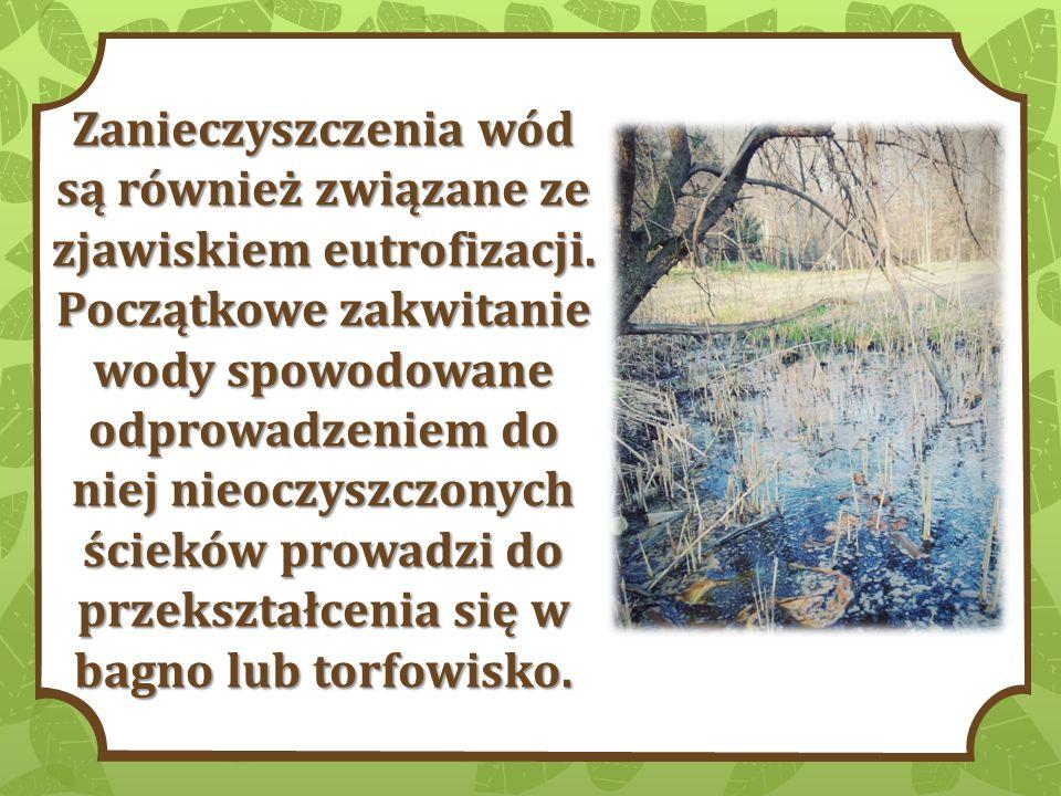Zanieczyszczenia wód są również związane ze zjawiskiem eutrofizacji. Początkowe zakwitanie wody spowodowane odprowadzeniem do niej nieoczyszczonych śc