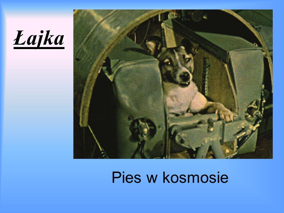 Łajka Pies w kosmosie