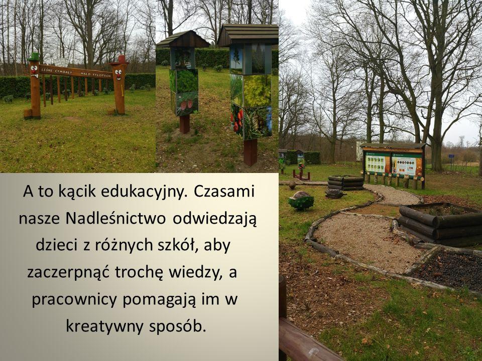 A tu widzimy jak nasze kochane bobry szanują prace leśników :) Oni sadzą drzewa, a one je niszczą.