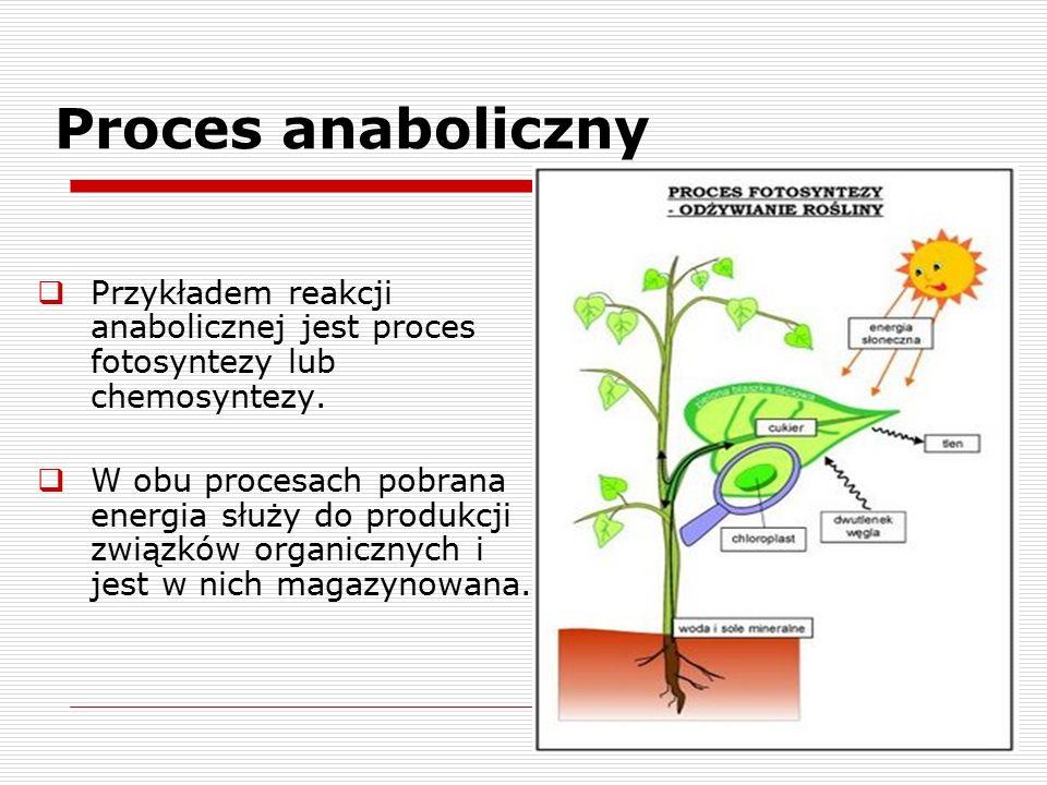 Proces anaboliczny  Przykładem reakcji anabolicznej jest proces fotosyntezy lub chemosyntezy.  W obu procesach pobrana energia służy do produkcji zw