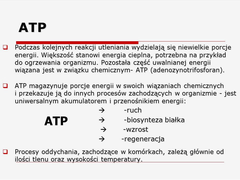 ATP  Podczas kolejnych reakcji utleniania wydzielają się niewielkie porcje energii. Większość stanowi energia cieplna, potrzebna na przykład do ogrze