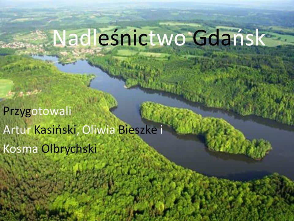 Nadleśnictwo Gdańsk Przygotowali Artur Kasiński, Oliwia Bieszke i Kosma Olbrychski
