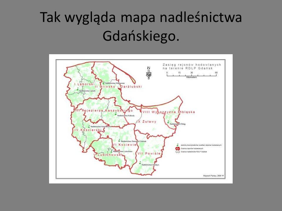 LEŚNICTWA Nadleśnictwo tworzy 17 leśnictw: Biała, Cisowa, Dębogórze, Gołębiewo, Kamień, Marianowo, Matemblewo, Przetoczyno, Renuszewo, Rogulewo, Sopieszyno, Sopot, Stara Piła, Witomino, Wyspowo, Zbychowo i Zwierzyniec.