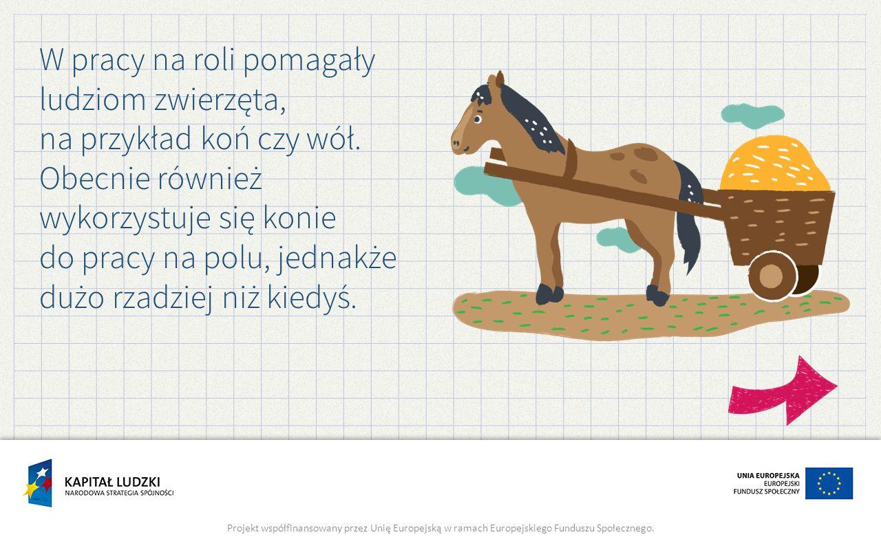 W pracy na roli pomagały ludziom zwierzęta, na przykład koń czy wół. Obecnie również wykorzystuje się konie do pracy na polu, jednakże dużo rzadziej n