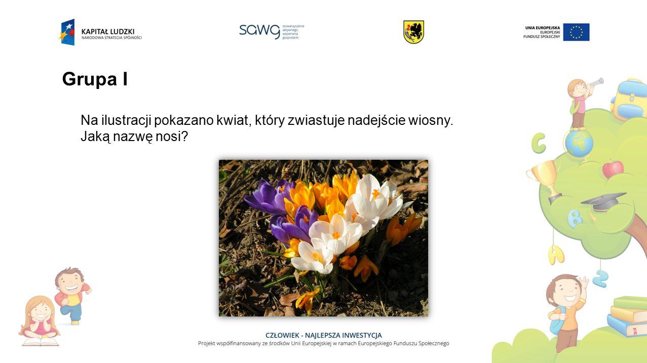 Grupa I Na ilustracji pokazano kwiat, który zwiastuje nadejście wiosny. Jaką nazwę nosi?