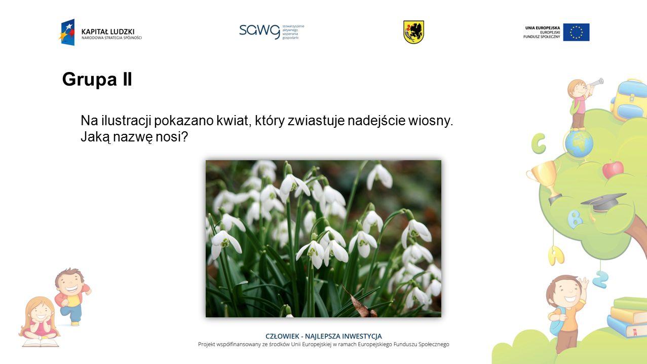 Grupa II Na ilustracji pokazano kwiat, który zwiastuje nadejście wiosny. Jaką nazwę nosi?