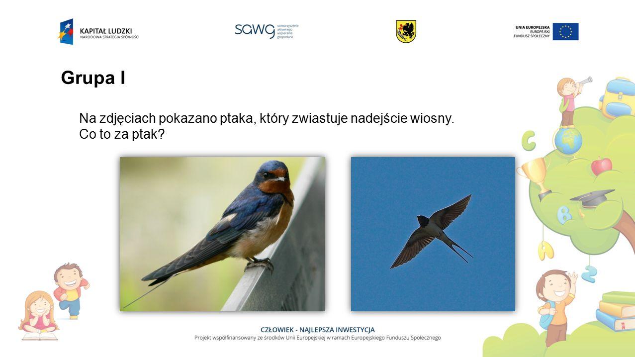 Grupa II Na zdjęciach pokazano ptaka, który zwiastuje nadejście wiosny. Co to za ptak?