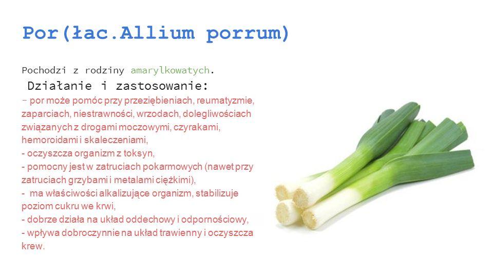 Por(łac.Allium porrum) Pochodzi z rodziny amarylkowatych. Działanie i zastosowanie: - por może pomóc przy przeziębieniach, reumatyzmie, zaparciach, ni
