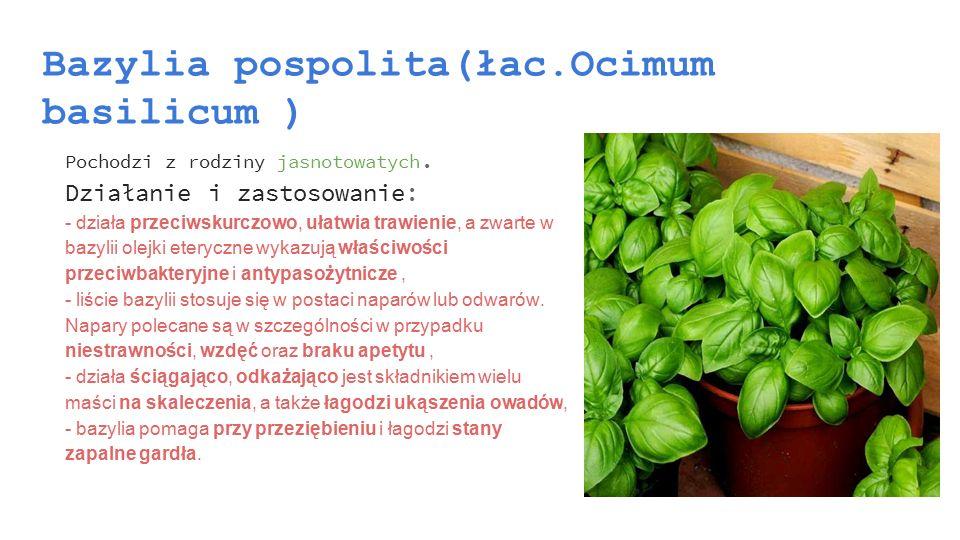 Cytryniec chiński(łac.Schisandra chinensis ) Pochodzi z rodziny cytryńcowatych.