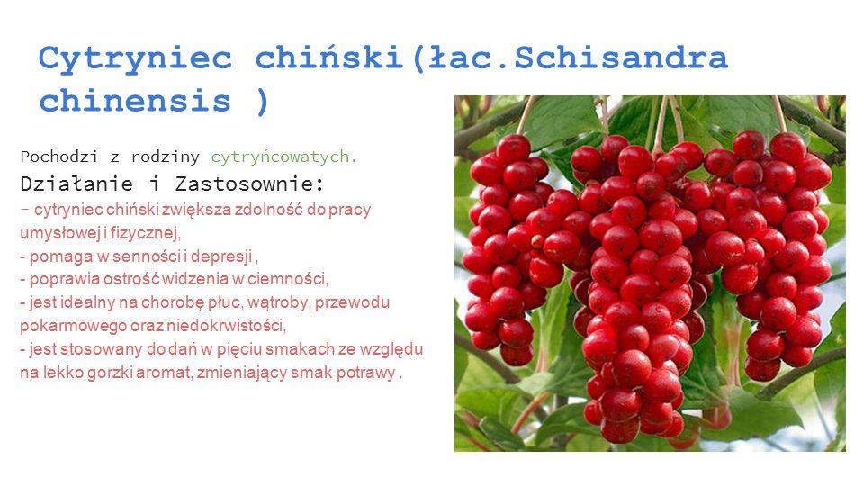 Cytryniec chiński(łac.Schisandra chinensis ) Pochodzi z rodziny cytryńcowatych. Działanie i Zastosownie: - cytryniec chiński zwiększa zdolność do prac